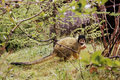 Cute monkey in nature Stock Photography