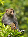 A cute monkey sitting in the branch Stock Images