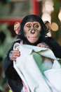 Cute Monkey smiling Royalty Free Stock Photos