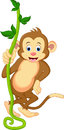A cute monkey swinging from vines illustration of Royalty Free Stock Image