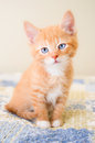 Cute orange kitten sitting on a blue and yellow quilt Royalty Free Stock Photo