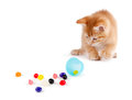 Cute Orange Kitten spilling jelly beans out of a plastic Easter Royalty Free Stock Photo