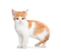Cute orange kitten on a white background and isolated Royalty Free Stock Photo