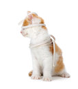 Cute orange and white kitten playing on a white background funny with shoelace isolated Royalty Free Stock Photo