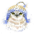 Cute owl t shirt graphics watercolor forest owl illustration with splash textured background Royalty Free Stock Photography
