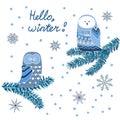 Cute owls sitting on fir tree. Winter