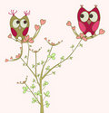 Cute owls on a tree Stock Photos