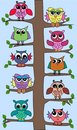 Cute owls in a tree