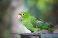 Cute parakeet colorful Stock Photos