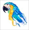 The cute parrot head