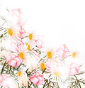 Cute pastel floral background with clean space and light Royalty Free Stock Photography