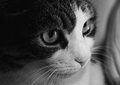 Cute pet cat portrait of black and white Stock Photo