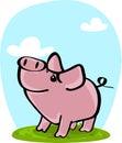 Cute pig on grass
