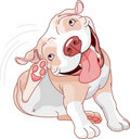 Cute pit bull scratching Royalty Free Stock Image