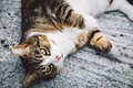 Cute Playful Cat Royalty Free Stock Photo