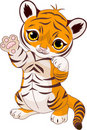 Cute playful tiger cub Royalty Free Stock Photo