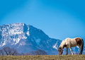 So cute Poney in countryside with mountains Royalty Free Stock Photo