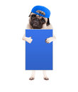 Cute pug puppy dog with cap, standing up holding blank blue sign and giving a like with thumb, isolated on white background Royalty Free Stock Photo