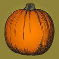 Cute pumpkin sketch Stock Photography