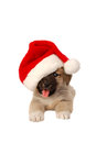 Cute puppy in a christmas hat holiday theme santa Royalty Free Stock Photos