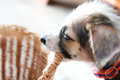 Cute puppy gnawing basket, dog with basket Royalty Free Stock Photo
