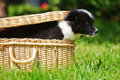 Cute puppy jumping out of a case elo german dog breed suitcase Stock Image