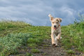 Cute puppy running in the grass Royalty Free Stock Photo