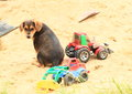 Cute puppy on sandpit sad brown sitting with toys diggers Royalty Free Stock Photography