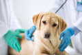 Cute puppy visit vet Royalty Free Stock Photo