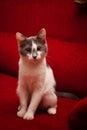 Cute pussy cat
