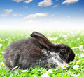 Cute Rabbit Stock Photos