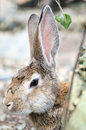 Cute rabbit with big ears in spring forest Royalty Free Stock Photo