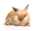 Cute rabbit in front. isolated on white background Royalty Free Stock Photo