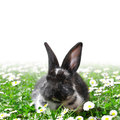 Cute rabbit in grass with daisies Stock Images