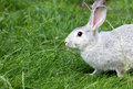 Cute rabbit in grass green Stock Photos