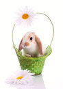 Cute rabbit in the green basket Stock Photography
