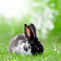 Cute rabbit in green grass Stock Image