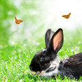 Cute rabbit in green grass Royalty Free Stock Photo