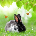 Cute rabbit in green grass Stock Images