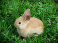 Cute rabbit llittle on green grass Stock Photography