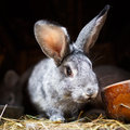 Cute rabbit popping out of a hutch Royalty Free Stock Photo