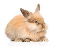 Cute rabbit in profile. isolated on white background Royalty Free Stock Photo