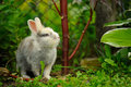 Cute rabbit in summer garden a gray and white a Stock Image