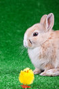 Cute rabbit and toy chicken Stock Image