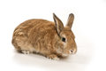 Cute rabbit on a white background Stock Photography
