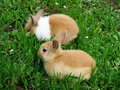 Cute rabbits llittle on green grass Royalty Free Stock Photo