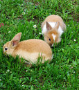 Cute rabbits llittle on green grass Royalty Free Stock Photography