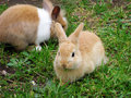 Cute rabbits llittle on green grass Stock Photo