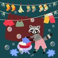 Cute raccoon washes clothes.