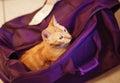 Roztomilý mačka v fialový taška